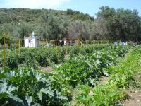 Vatera Beach Hotel's own organic farm